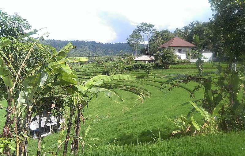 Rizière en plateaux- Bali
