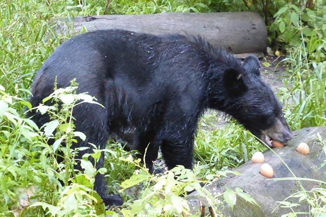observation des ours à St Jean des piles